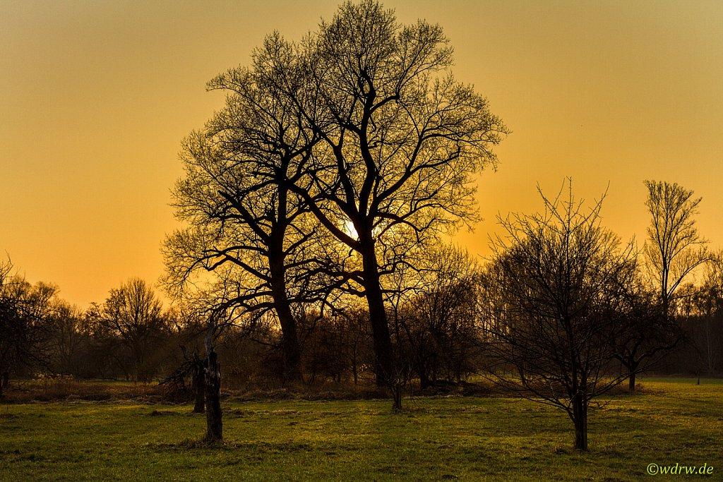 Sonnenuntergang im Feld am Rhein