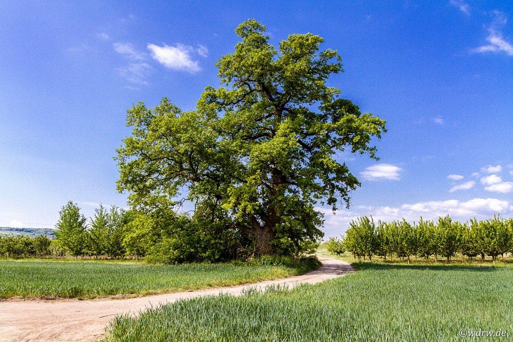 Mein Lieblingsbaum