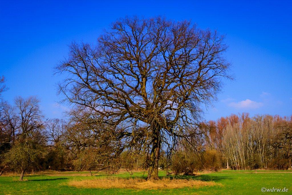 Baum an Haderaue