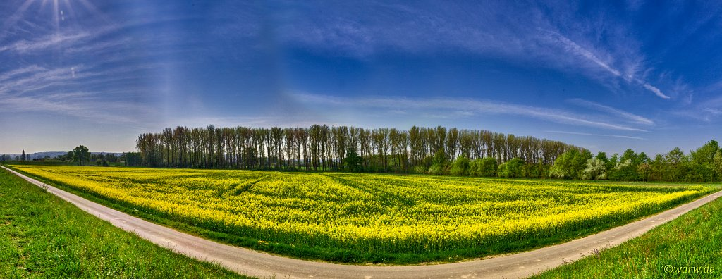 Rapsfeld Panorama
