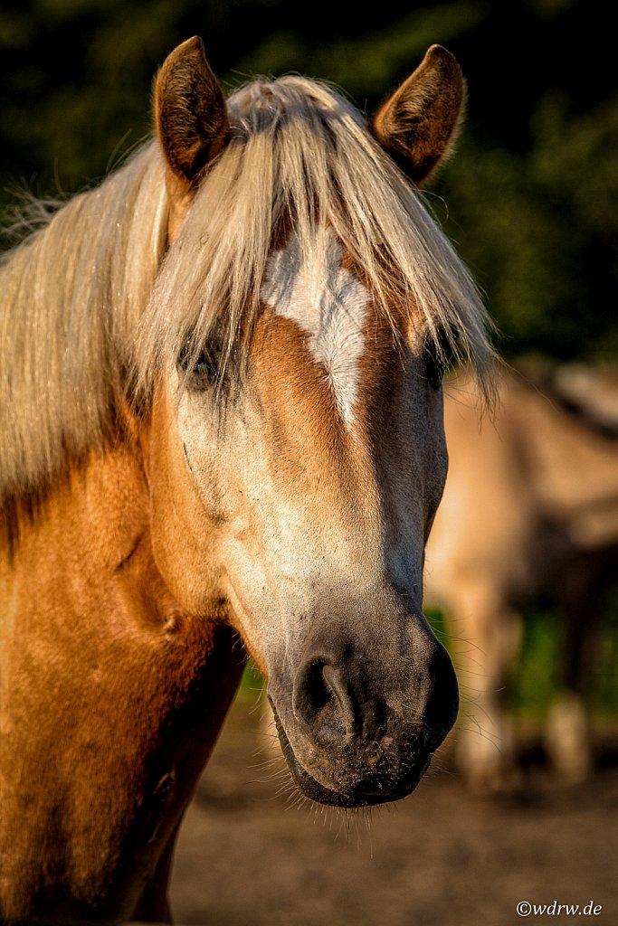 In der Pferdekoppel
